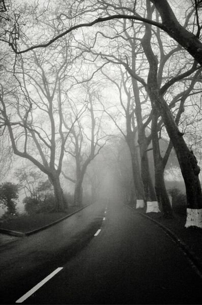 I want to take this path
