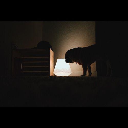 "iphonevisualdiary: ""Night owl #VSCOcam #vscogood #vsco #pug #carlospugsley #pug…"
