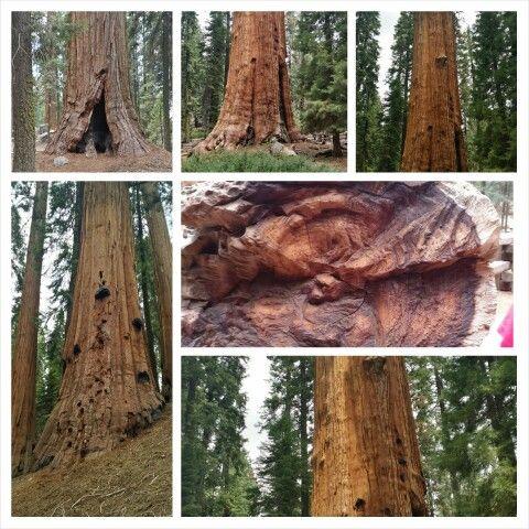 Huge amazing trees