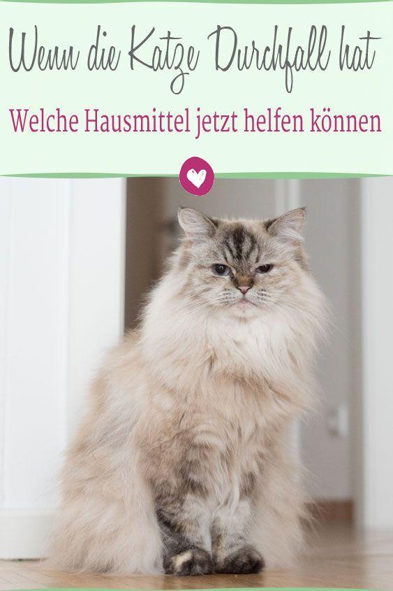 Welche Hausmittel Einer Katze Mit Durchfall Helfen Konnen Katzen Haustiere Durchfall Hausmittel Katze Durchfall Katzen Katzenkrankheiten
