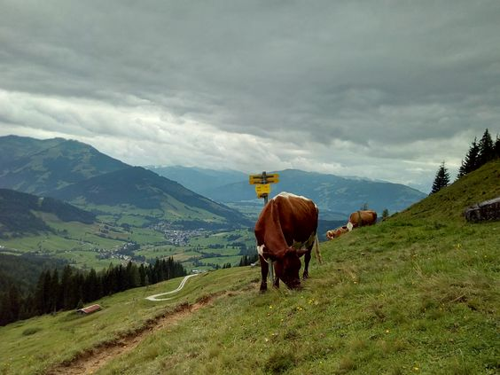 Hiking up and around Hochkönig Austria. #hiking #camping #outdoors #nature #travel #backpacking #adventure #marmot #outdoor #mountains #photography