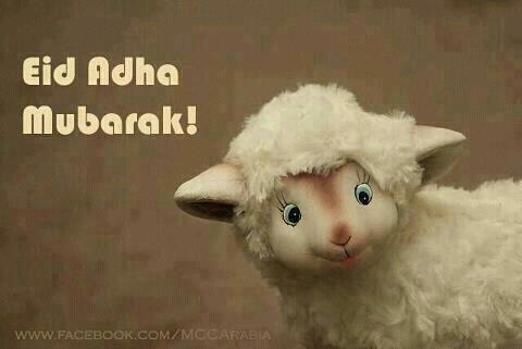 cute sheep drawings | Cute Sheep Eid al-Adha Greeting - Drawings | IslamicArtDB.com