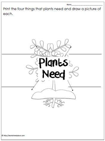 Plant Needs Worksheet | Classroom - Science | Pinterest ...