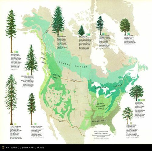 Timber The Renewable Resource 1974maps Six Forest Zones In North
