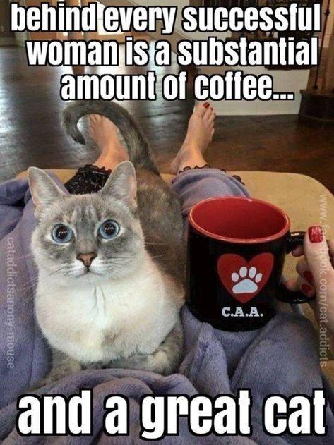 No Truer Words Were Ever Spoken Cats Crazy Cats Cat Memes