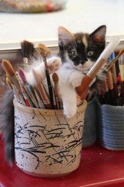 Gatito entre lápices