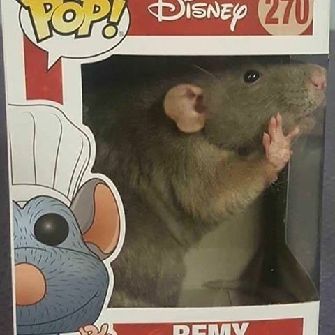 Image Result For Ratatouille Meme Cute Rats Funny Pictures Funny Memes