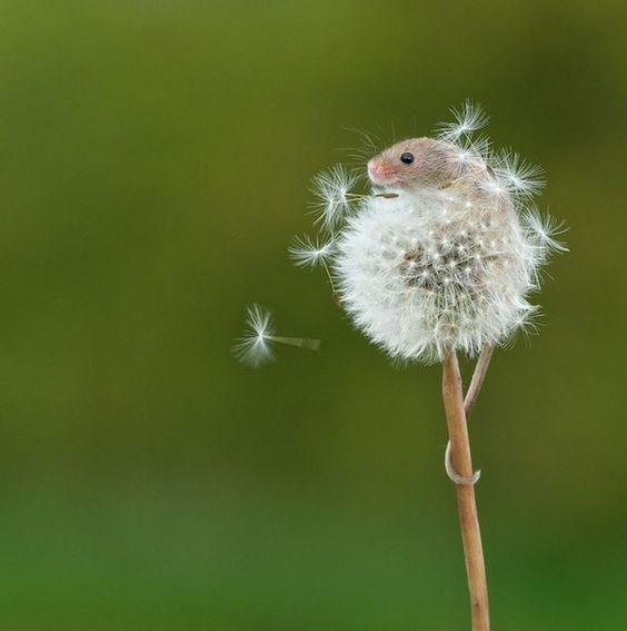 tiny dandy mouse!  @hipster-lovin