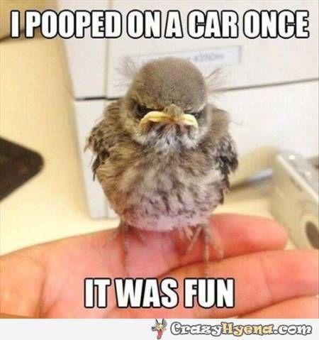 Grumpy sparrow meme, funny captions meme