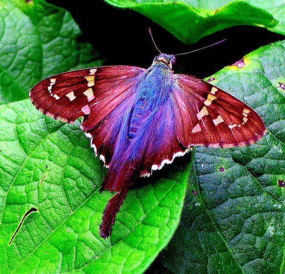 Stunningly beautiful moth.