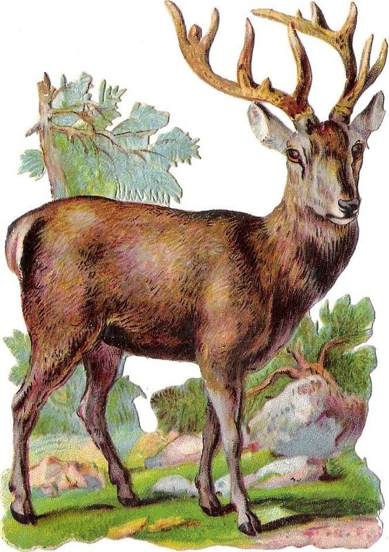 Oblaten Glanzbild scrap die cut chromo Hirsch  12cm  deer stag Wald Tier wood: