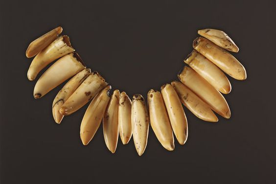 Finch & Co - Fijian Necklace Composed of Sixteen Small Whole Sperm Whale Teeth