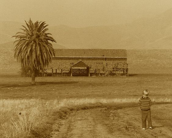 Frazier Valley, Tulare County, CA.  Early 1970s. This barn has long since been reclaimed be the earth, however the old palm tree remains to this day.