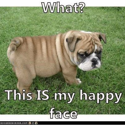 What? This IS my happy face. Funny. Dogs. http://www ...