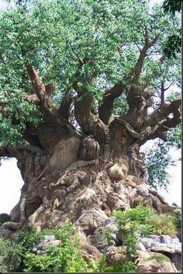 Wow--what a tree!