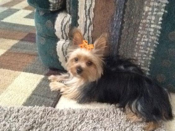 Little Miss Jazzy