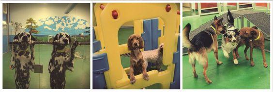 Daycare Dog Daycare Pet Hotel Doggy