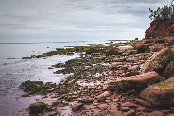 The rocky red shores of Prince Edward Island Canada [OC] [4896x3264]: