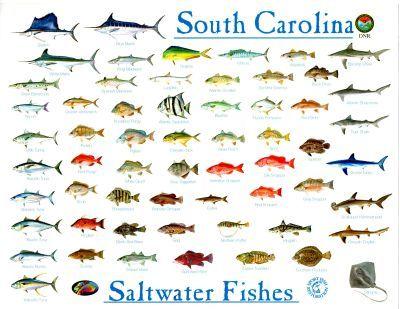 Fish identification chart fish chart pinterest for Saltwater fish chart