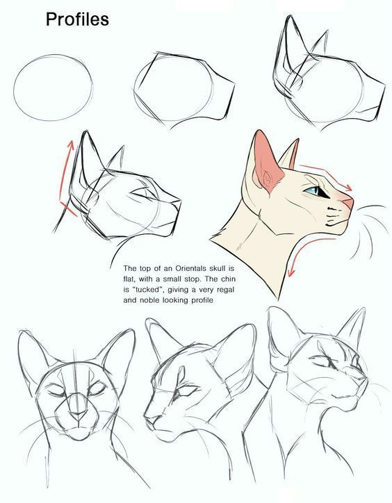 Cat Head Reference In 2020 Cat Drawing Tutorial Animal Drawings Warrior Cat Drawings
