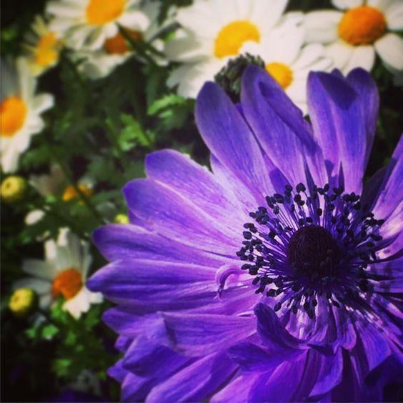 #ファインダー越しの私の世界 #写真好きな人と繋がりたい #igersjp #花 #カメラ好き by tenaryo