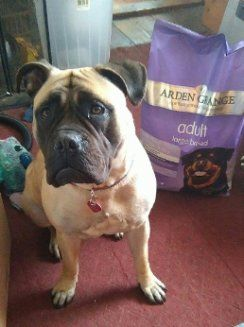 This pretty lady, patiently waiting for her dinner, is Lily the English Mastiff. Owner Katie Sheppard has been in touch with us since Lily was a pup and we have loved watching her grow. Katie tells us Lily made a seamless transition to our Adult Large Breed recipe. She loves crunching on the large kibbles and it keeps her and her tummy happy. That makes us happy too! Thanks to Katie for sharing.