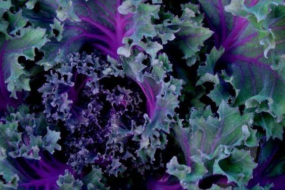 Non-flowering beautiful vegetable...