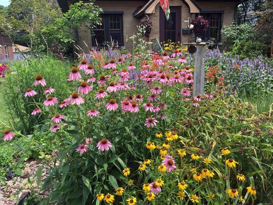 Micro Prairies No Yard Is Too Small To Go With Earth Friendly Native Plants Design De Native Plants California Native Plants Native Plant Gardening