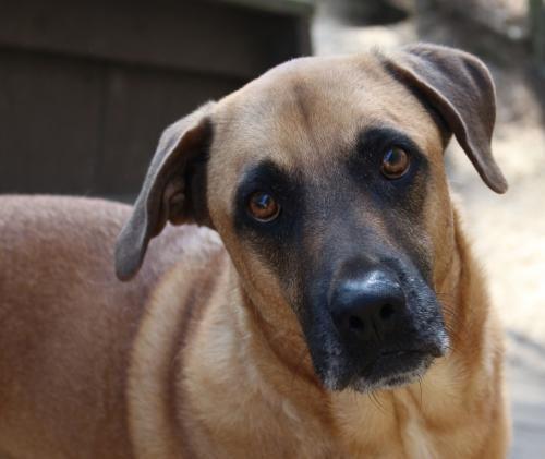 Adoptions Dog Star Rescue Dog Star Rescue Dogs Adoption
