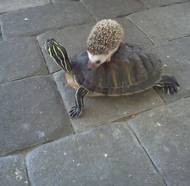 It's just a hedgehog taking the turtle taxi.(I have the turtle...I REALLY need the hedgie.):