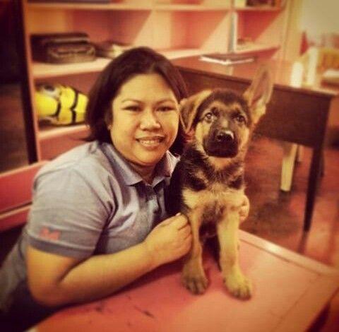 #gsd #germanshepherd #puppy