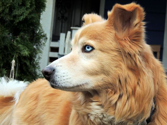 This is Waffles. He is a dog that lives with Fluffy, Twilight, and Cloudy. She likes to chase them when they're outside.