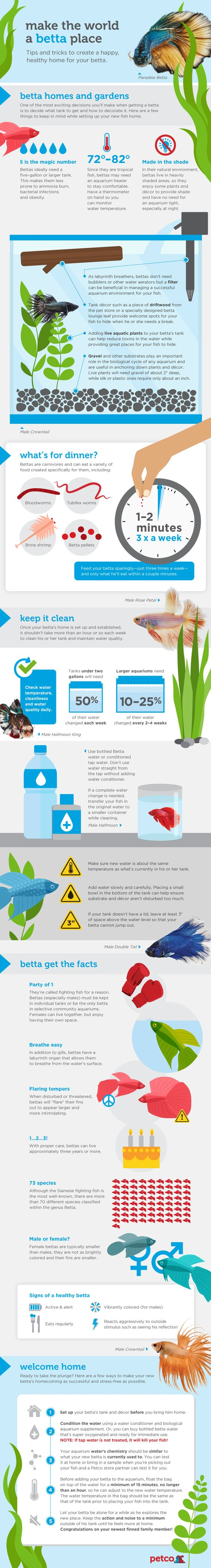 There's a reason people of all types love bettas. Sometimes called Siamese fighting fish, these feisty fish pack a lot of personality into a very small package and make great pets for almost every living situation. You'll find them right at home on a desk at the office, enhancing the look of a livin...