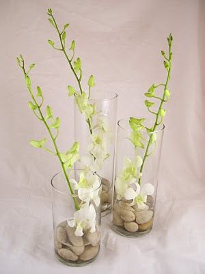 Dendrobium orchids are beautiful and available year-round at GrowersBox.com. This is a great example of how elegant even simple wedding centerpieces can be.: Dendrobium Orchids, Wedding Things, Wedding Flowers, Simple Weddings, Cylinder Vases, Simple Wedding Centerpieces, Fall Wedding, Diy Wedding