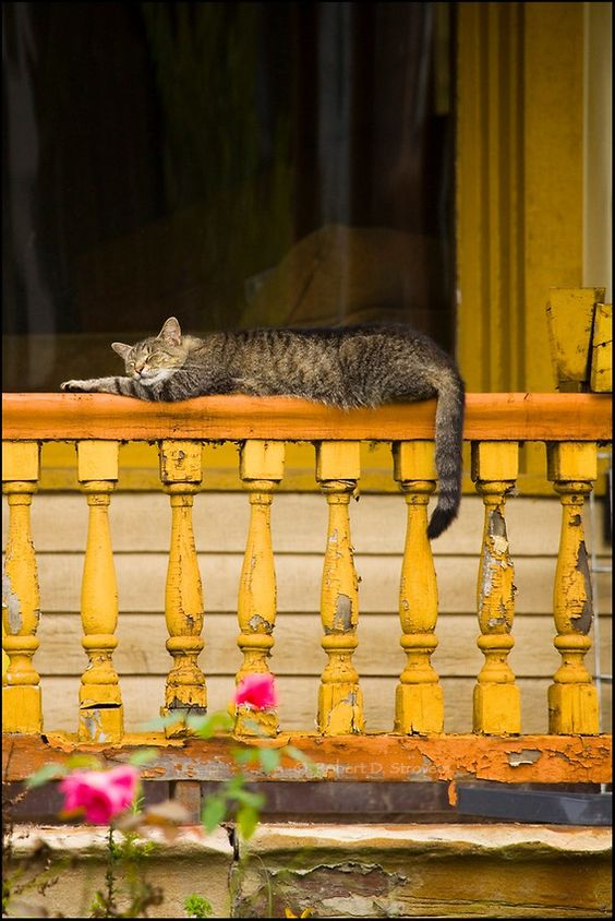 Robert Strovers - Urban: Snoozing Cat on Porch Rail: