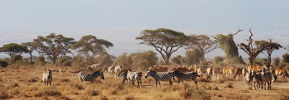 Excursions in Nairobi and Mombasa