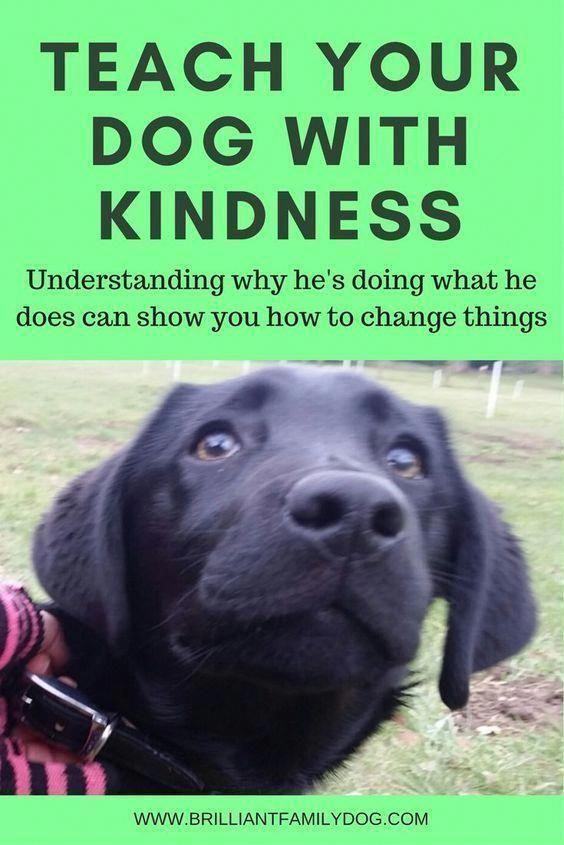 Dog Training Puppy Training Dog Behavior Teaching Your Dog