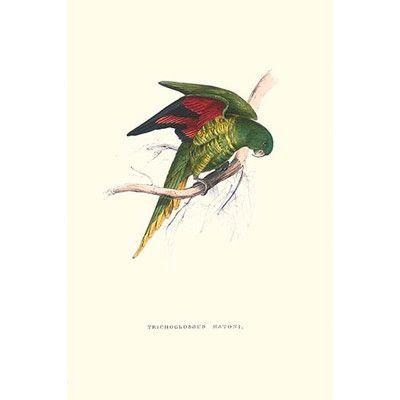 Buyenlarge 'Lesser Maton's Parakeet -Trichoglossus Haematodus' by Edward Lear Graphic Art Size: