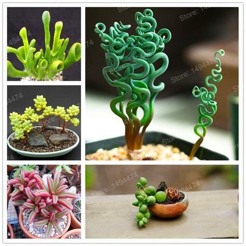 100 Seeds Mixed Succulents Rare Plant Flower Office Home Garden Pot Decor new
