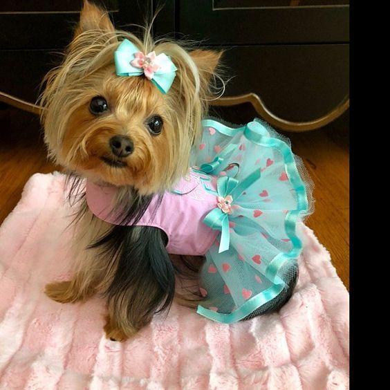 Dog Dress Ladybugs And Hearts Lady Bug Dog Dress Ladybug Etsy Dog Clothes Patterns Cute Dog Clothes Small Dog Clothes