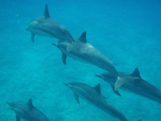 Dolphin Therapy at Hawaii Island Recovery  http://www.hawaiianrecovery.com/therapies.html