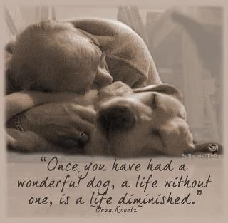 """""""Once you have had a wonderful dog, a life without one, is a life diminished"""". True."""