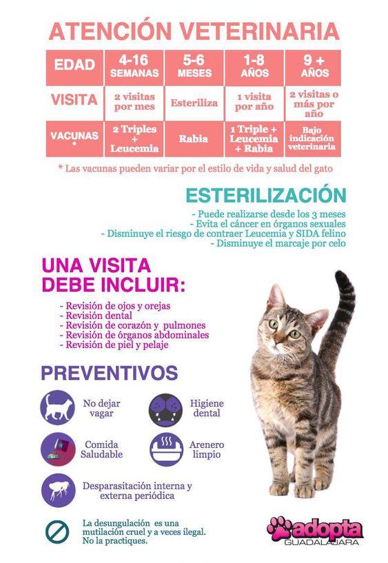 Infografía Atención Veterinaria en Gatos | Adopta.mx