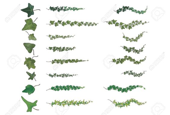 Ivy Branches Species Collection, Each With Its Own Vein Structure,.. Royalty Free Cliparts, Vectors, And Stock Illustration. Pic 21555035.