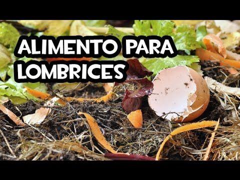 El Mejor Alimento Para Lombrices Huerto Organico Youtube Compostaje Con Lombrices Como Criar Lombrices Jardín De Productos Comestibles