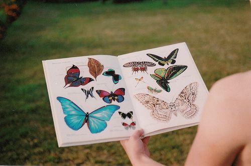 Ocean of Emotion. Butterflies