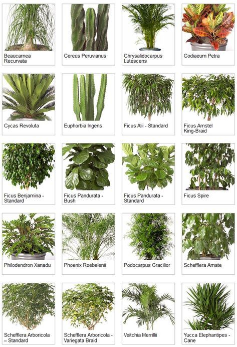 Learn English Vocabulary Through Pictures Flowers And Plants Eslbuzz Learning English Indoor Tropical Plants Tropical House Plants Plants