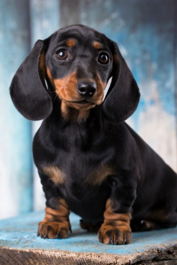If You Love Dachshunds Visit Our Blog Doglovers