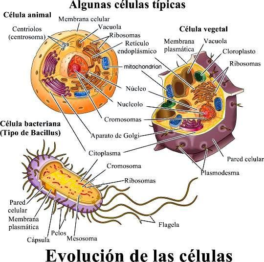 Las Celulas Enseñanza Biología Notas De Biología Biología Celular