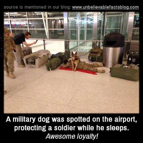 A military dog was spotted on the airport, protecting a soldier while he sleeps. Awesome loyalty!